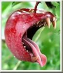 Alimentos de Almidón y Proteína son venenos y por ellos caímos en el Pecado Original.